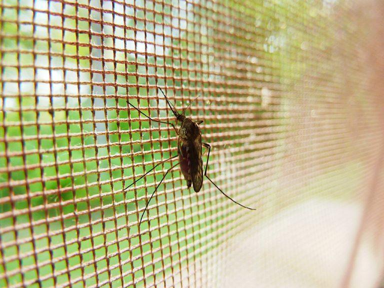 mosquito-19487_1280